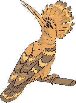back, bird, looking, sight, feathers, perched, breed