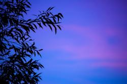 background, branch, dusk, evening, leaf, leaves, nature