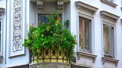balcony, plant, sun flower, building
