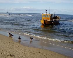 baltic sea, sea, fishing boat, ducks, duck