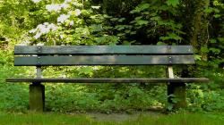 bank, sit, park bench, rest, summer, forest, recovery