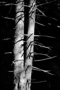 bark, branch, forest, nature, outdoor, pattern, plant