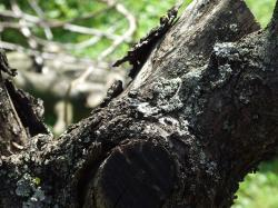 bark, fly, wood, tribe, log, forest, trunks, nature