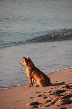 beach, dog, sunrise, animals, summer