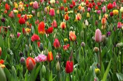 beautiful, flower, bed, bloom, background, color