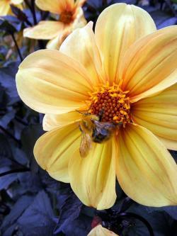 bee, wildlife, insects, yellow, flower