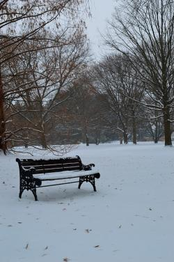 bench, winter, season, scenery, lonely