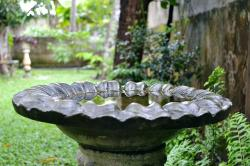 bird bath, bath, bird, wildlife, garden, wet, rainy