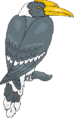 bird, branch, wings, animal, beak, feathers, perched