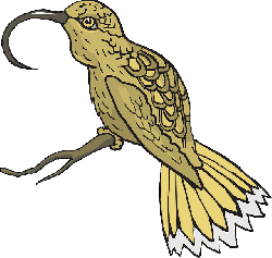 bird, branch, wings, animal, beak, feathers
