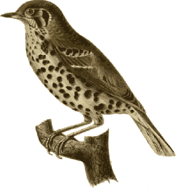 bird, feathers, animal, brown, spotted, dotted, sitting