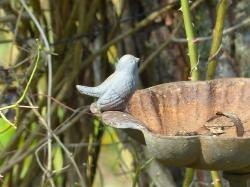bird, fig, metal, bird bath, rust, deco, decoration