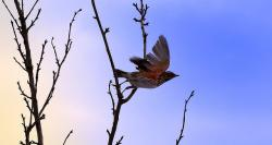 bird, flight, animal, branch, macro, background