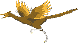 bird, running, wings, ancient, archaeopteryx, feathers
