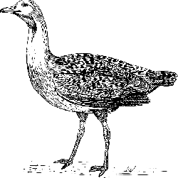 bird, wings, bustard, feathers, species, stand, animal