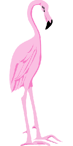 bird, wings, flamingo, long, standing, neck, animal