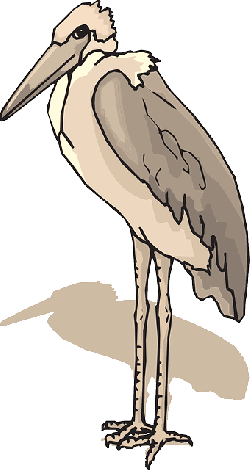 bird, wings, leg, standing, stork, animal, feathers
