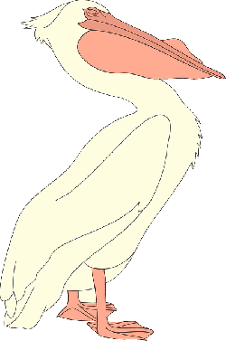 bird, wings, pelican, animal, beak, feathers