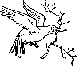 birds, bird, branch, flying, carrying, fly, carry