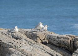 birds, gulls, ocean, shore, beach, water, bay