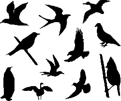 birds, sparrows, doves, pigeons, swallow, martin, goose