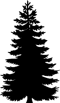 black, evergreen, large, outline, silhouette, tree