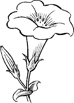 black, outline, drawing, flower, white, flowers, free