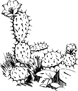 black, outline, drawing, sketch, plants, cactus, flower