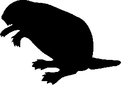 black, silhouette, beaver, wood, tail, dam