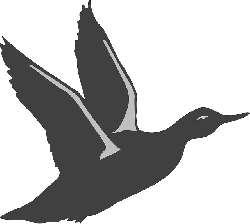 black, silhouette, bird, duck, flying, wings, taking