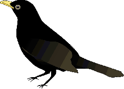 blackbird, raven, crow, animal, bird, black