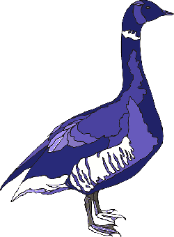 blue, purple, bird, wings, goose, animal, feathers, and