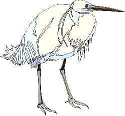 blue, white, bird, wings, standing, heron, feathers