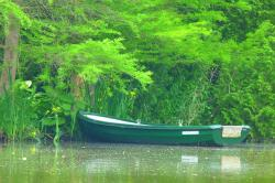 boot, rowing boat, see, nature, water, trees