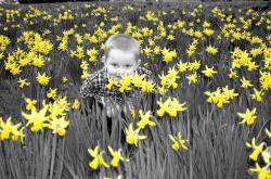 boy, flower background, nature, season, spring smell