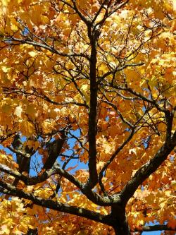 branches, crotch, aesthetic, autumn, colorful, gaudy