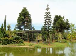 brasilia, brazil, botanical garden, trees, pond, water