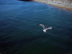 brighton, seagull, sea