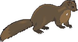 brown, animal, tail, claws, fur, mink