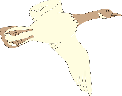 brown, bird, flying, color, cream, wings, goose, animal