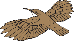 brown, bird, flying, wings, beak, feathers, fly