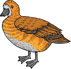 brown, orange, bird, duck, wings, art, feathers, and