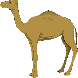 brown, sand, one, camel, long, standing, neck, animal