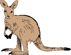 brown, simple, australia, kangaroo, pouch, long, animal