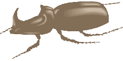 brown, view, side, art, insect, beetle, legs, horned