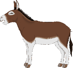 brown, view, white, donkey, side, animal, tail, mammal