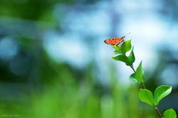 butterfly, flower, orange, plant