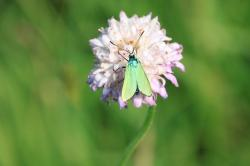 butterfly, green, metallic, reflection, wings, insects
