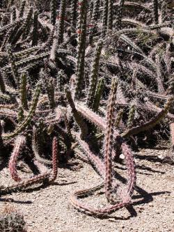 cactus, desert, arizona, usa, dry, hot