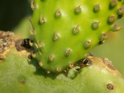 cactus, plant, thin, nature, prickly, flora